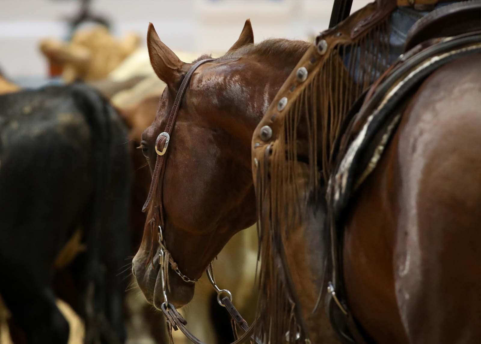 Southwest Reined Cow Horse Association